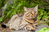 Cat in the wood — Stock Photo