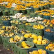 Stock Photo: Field of Gourds