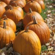 Pumpkins in Fall — Stock Photo