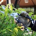 Pruning — Stock Photo #10195810
