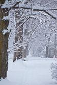 白雪皑皑的路径 — 图库照片