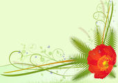 Flower background with red poppy — Stock Photo