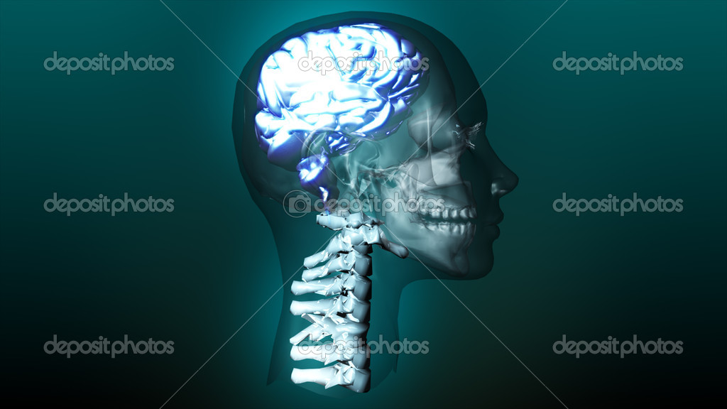 3d highly detailed animation of a human brain — Stock Photo #10282660