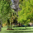 Trees and lawn - 
