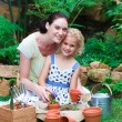 Stockfoto: Mother and daughter planting in their garden