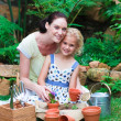 Foto Stock: Mother and daughter planting in their garden