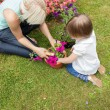 Stock Photo: Family plant flowers in the garden