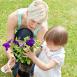 Family plant flowers — Stock Photo