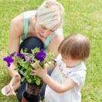 Family plant flowers — Stock Photo