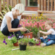 Family plant colorful flowers — Stock Photo