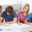 Four students studying hard — Stock Photo