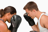 Side view of two boxers — Stock Photo