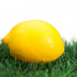 Yellow lemon on grass - Stock Photo