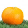 Orange on grass - Stock Photo