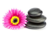Pink and yellow flower and piled up pebbles — Stock Photo