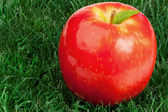 Roter apfel und seine blatt auf gras — Stockfoto