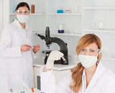 Blond-haired and dark-haired scientists carrying out an experime — Stock Photo