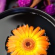 Orange flower floating in a black bowl and purple dry flowers — Stock Photo #10599442