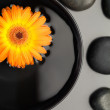 Orange flower floating in a bowl surrounded by black pebbles — Stock Photo #10599451