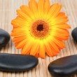 Sunflower surrounded by black stones — Stock Photo #10599588