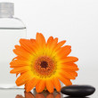 A black pebble with an orange gerbera and a glass flask — Stock fotografie