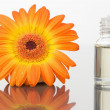 Stock Photo: Glass phial and orange gerbera