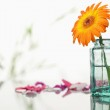 Orange gerbera in a glass flask with pink petals and leaves — Stock Photo