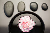 Pink and white carnation floating in a black bowl with aligned b — Stock Photo
