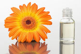 A glass phial and an orange gerbera — Stock Photo