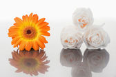 White roses and orange gerbera on a mirror — Stock Photo