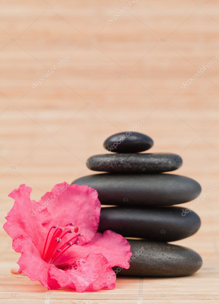 Pink orchid next to a black stones stack  Stock Photo #10599679