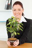 Cute businesswoman holding a plant — Stok fotoğraf