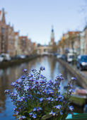 Flowers outdoors over the canal on background of the traditional — Stock Photo