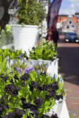 Flowers in white metal pails in street flower shop — Stock Photo