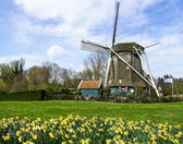 Traditional dutch windmill with daffodils, Netherlands — Stock Photo