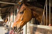 Horses in their stalls — Stock Photo