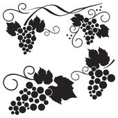 Set of grape design elements — Stock Vector