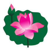 Flowers of Lotus — Stock Vector