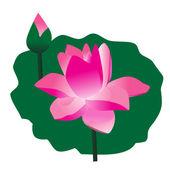 Flowers of Lotus — Stock Vector