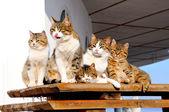 Cat-like family — Stock Photo