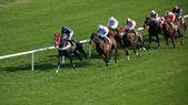 Horce yarış — Stok fotoğraf