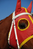 Horse Head with Blinders — Stock Photo