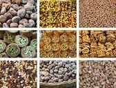フレッシュとドライ フルーツのコレクション — ストック写真