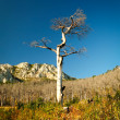 Dead tree landscape - Stock Photo