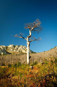 Dead tree landscape — Stockfoto