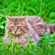 Cat on grass — Stockfoto