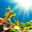Colorful underwater world with sun - Stock Photo