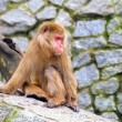 Stock Photo: Sitting monkey
