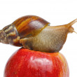 Snail on red apple — Stock Photo