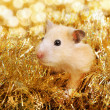 Little hamster in tinsel — Stok fotoğraf